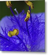 Dressed In Blue Jackets #2 Metal Print