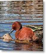 Ducky Delight Metal Print