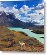Early Autumn In Patagonia. National Metal Print