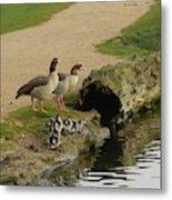 Egyptian Geese Metal Print