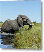 Elephant Crossing The Water, Xigera Metal Print