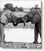 Elephants Curling Trunk Metal Print