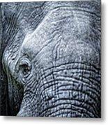 Elephants Eye Close-up Metal Print