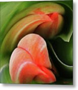 Emerging Tulips Metal Print