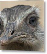Emu Print 9053 Metal Print