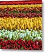 Endless Beautiful Tulip Fields Metal Print