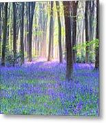 English Bluebell Wood At Dawn Metal Print
