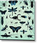 Engraving Vintage Insect Set From Metal Print