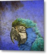 Blue Exotic Parrot- Pirates Of The Caribbean Metal Print