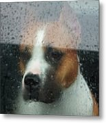 Faithful Dog Sitting In A Car And Metal Print