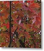 Fall Collage Metal Print