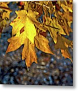 Fall Has Sprung Metal Print