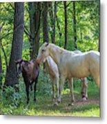Family Of Horses Metal Print