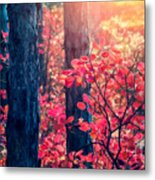 Fantastic Forest With Cotinus Metal Print