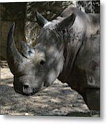 Fantastic Profile Of A Rhino With A Long Horn Metal Print