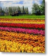 Farming Tulips Metal Print