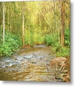 Fawn Drinking From Stream Metal Print