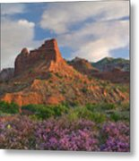 Feather Dalea, Caprock Canyons State Metal Print