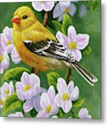 Female American Goldfinch And Apple Blossoms Metal Print
