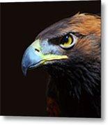 Female Golden Eagle Metal Print