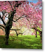Cherry Orchard Afternoon Metal Print
