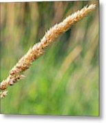 Field Grass Metal Print
