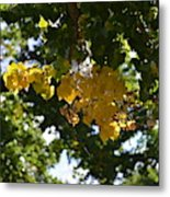 First Golden Leaves Metal Print