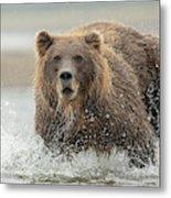 Fish Coastal Brown Bear Of Alaska Metal Print