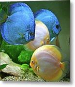 Fish In Water Metal Print