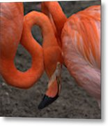 Flamingo Couple Metal Print