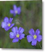 Flax Wildflowers Metal Print