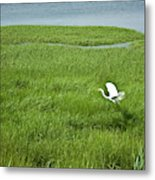Salt Marsh Flight Metal Print