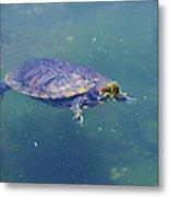 Floating Turtle Metal Print
