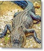 Florida Gator 2 Metal Print