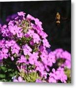 Flower And Bee Metal Print