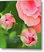 Flower Buds Rising Metal Print