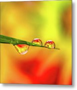 Flower In Water Droplet Metal Print