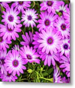 Flower Patterns Collection Set 04 Metal Print