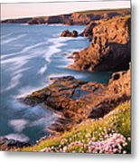 Flowering Sea Thrift Armeria Maritima Metal Print