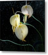 Flowerography Metal Print