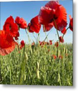 Flowers As A Colorful Background, Macro Metal Print