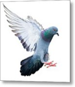 Flying Pigeon Bird In Action Isolated Metal Print