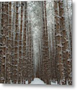 Forest In Sleeping Bear Dunes In January Metal Print