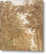 Forest Road Wi  Metal Print