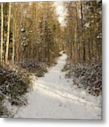 Forest Track In Winter Metal Print