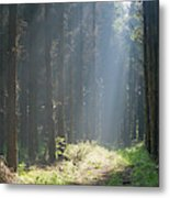 Forrest And Sun Metal Print