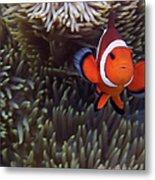 Found Nemo Metal Print
