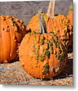Fresh Butternut Pumpkins Metal Print