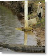 Friendly Hunting Together Metal Print