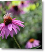Frilly Hat Echinacea Metal Print